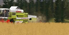 graan oogst!