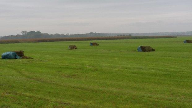 Vandalen hebben het gemunt op boeren.