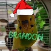 Brandon2004